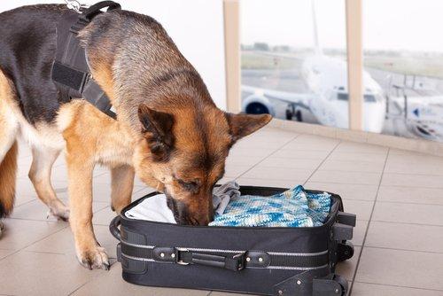 Der berühmte Geruchssinn von Hunden