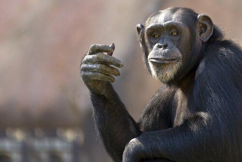 Die 5 intelligentesten Tierarten