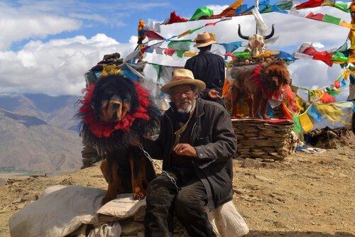 teuerste hund der welt tibetanischer mastiff deine tiere. Black Bedroom Furniture Sets. Home Design Ideas