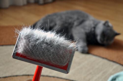 Gefahren beim Fellwechsel von Katzen