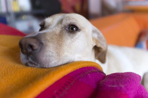 Eine Bindehautentzündung beim Hund kann verschiedene Ursachen haben.