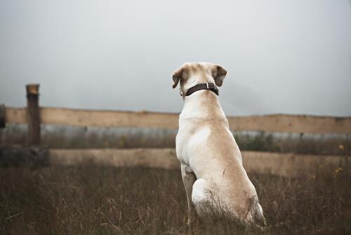 Einsamer Hund schaut verloren in die Welt