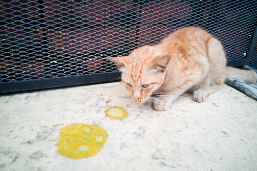 Erbrechen bei Katzen
