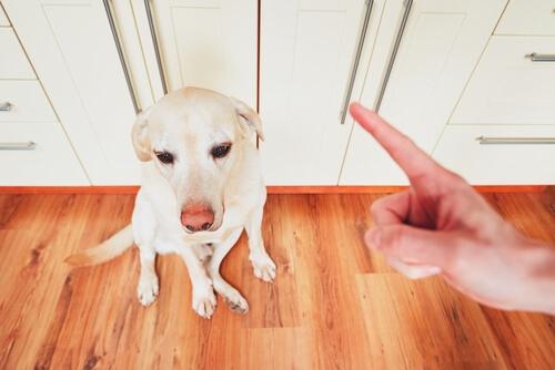 Die Erziehung eines Hundes ist sehr wichtig