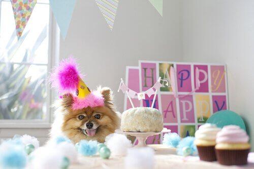 Ein Festessen für den Hund