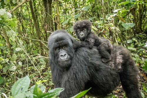 Primatenreservate in Spanien
