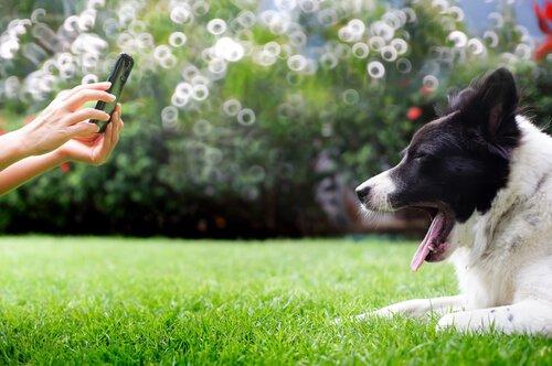 Gute Hundefotos im Garten