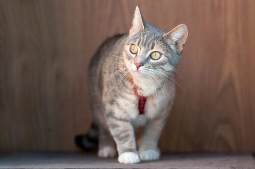 Halsbänder bei Katzen - darauf solltest du achten
