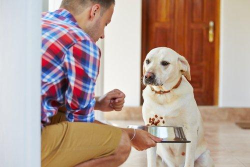 Hund mit Nierenversagen hat oft keinen Hunger