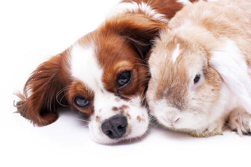 Hund und Hase harmonieren in diesem Bild