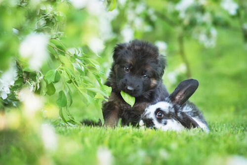Hund und Hase spielen miteinander