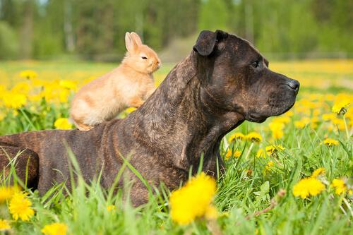 Hund und Hase verstehen sich gut