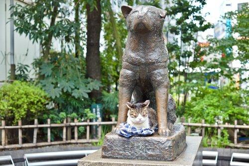 4 Hunde, die dem Beispiel von Hachiko folgten