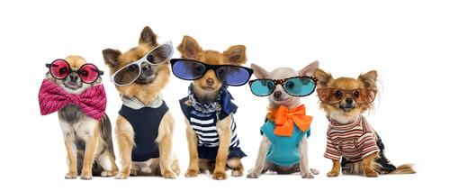 Verhasste Hundekleidung und -accessoires