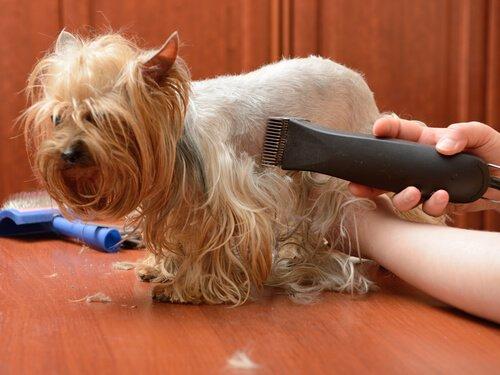 Im Hundesalon arbeiten Spezialisten