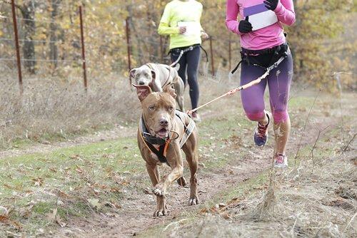 Hundesportarten: Canicross
