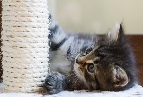 Intelligenzspiele für Katzen: Kratzbaum