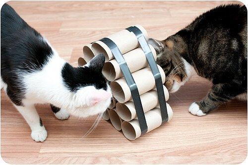 Intelligenzspiele für Katzen mit Klorollen