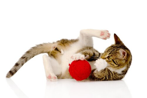 Intelligenzspiele für Katzen