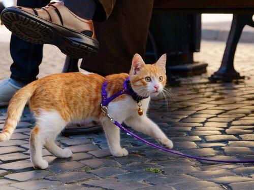 Gassi mit der Katze: Tipps und Ratschläge