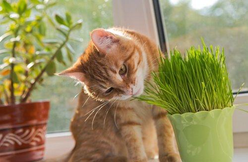 Katze knabbert Hauspflanze an
