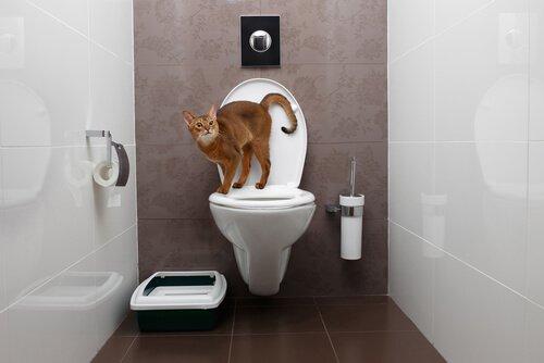 Katze uriniert im ganzen Haus