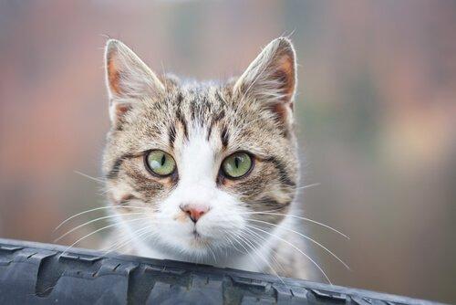 Was bedeutet der Blick einer Katze?
