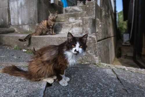 Katzeninseln in Japan: Tashirojima