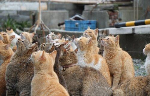 Die Katzeninseln in Japan