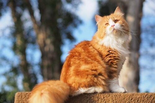 Katzennamen aus der nordischen Mythologie