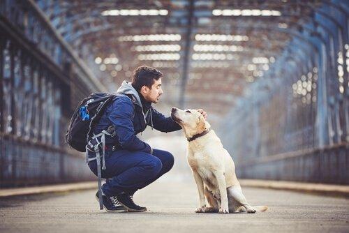 Mit dem Hund durch die USA reisen: spektakuläre Routen