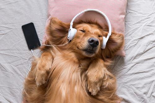 Musik für Tiere
