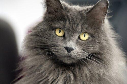 Namen für Katzen mit langem Fell