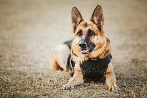 Namen für Polizeihunde