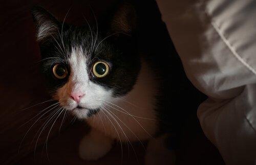 Neugier der Katzen