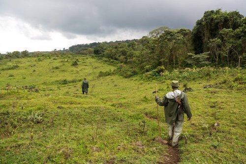 Schutz von Gorillas