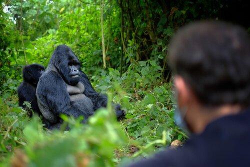 6 Ranger getötet, weil sie Gorillas beschützten