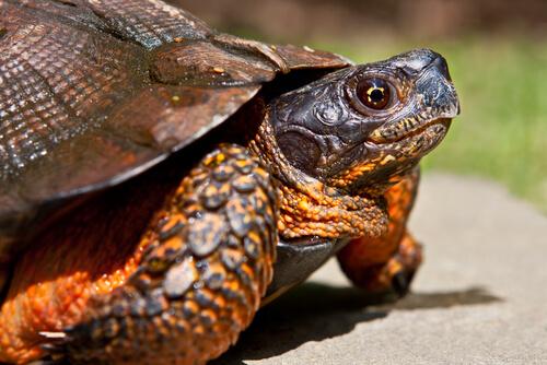 4 Arten von Schildkröten als Haustiere