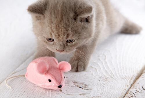 Selbstgemachtes Katzenspielzeug: Plüschmaus