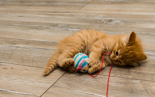 Selbstgemachtes Katzenspielzeug