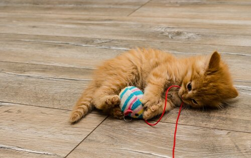 Spielzeug macht Katzen glücklich