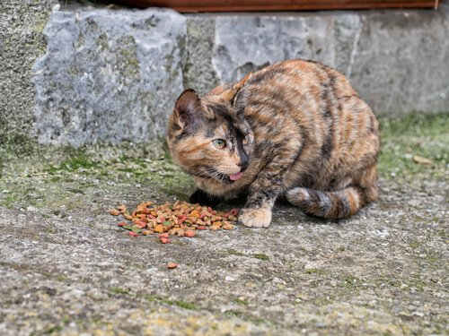 Straßenkatzen füttern