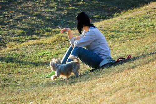 Tabakrauch schädigt Hunde