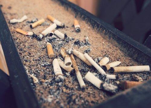 Wie sehr schädigt Tabakrauch unsere Haustiere?