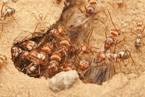 Die Ameise ist eines der Tiere, die am wenigsten schlafen