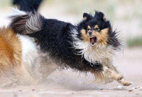 5 Tipps zur Kontrolle der Aggressivität von Hunden