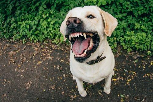 Ursachen der Aggressivität von Hunden