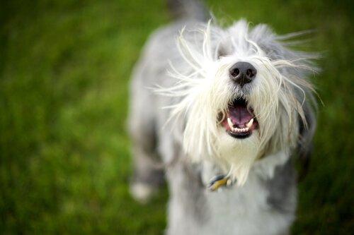 Warum bellt mein Hund?