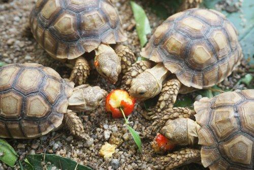 Was fressen diese Schildkröten gerne?