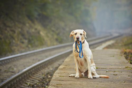 Was macht man wenn der Hund verloren geht